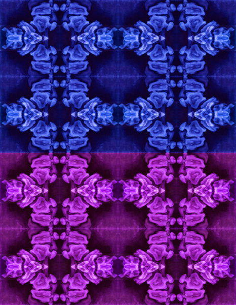 Vertebrae in Blue and Purple